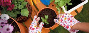 plantations en pots et jardinières